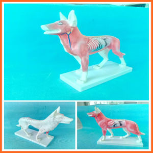Dog Acupuncture Model, Animal Acupuncture Models for Veterinarian′s Reference pictures & photos
