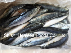 150-250g Frozen Chub Mackerel Pacific Mackerel for Market pictures & photos