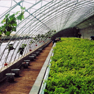Low Cost High Quality Vegetable Growing PC Green House pictures & photos