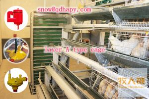 Professional Chicken Cages in Poultry House in Hot Sale pictures & photos