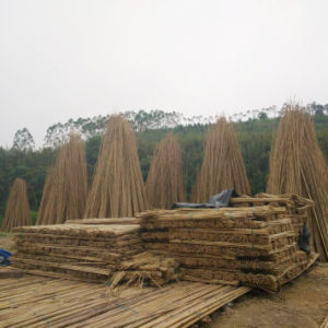 Hot Sale- Bamboo Sticks with High Quality and Best Price pictures & photos