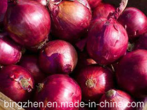 5.0cm and up New Crop Fresh Red Onion pictures & photos