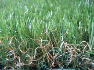 Green Backing Artificial Grass with Good Price pictures & photos