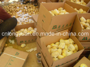 Shandong Origin Fresh Potato New Season pictures & photos