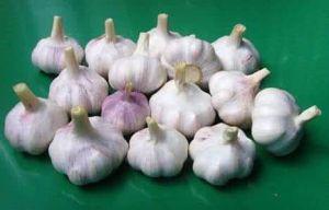 2017 New Crop Fresh Purple Garlic pictures & photos
