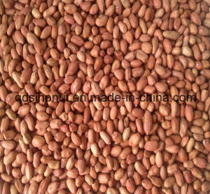 New Season China Peanut Kernels Long Shape (24/28) pictures & photos