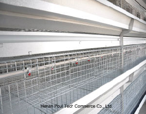 Full Automatic Poultry Farm Pullet Cage Equipment System (H Type) pictures & photos