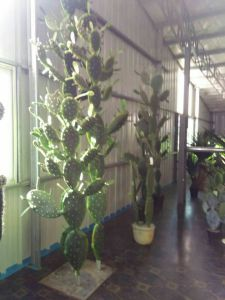 Artificial Plants of Cactus Mexico Style with 4 Hands pictures & photos