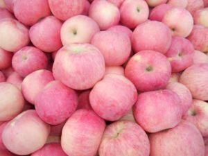 Fresh FUJI Apple pictures & photos