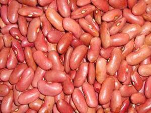 2012 Crop Light Red Kidney Beans
