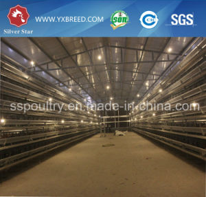 Poultry Farm Brid Cage for Hot Sale in Ghana pictures & photos