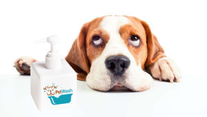 Natural Odour Removing Dog Bath Shampoo for Sensitive Skin and Dry Skin pictures & photos