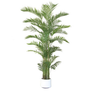 Artificial Plants of Areca Palm Tree pictures & photos