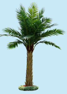 Outdoor Decorative Artificial Date Palm Trees pictures & photos