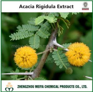 100% Natural Acacia Rigidula Bark Extract with Alkaloid Assay pictures & photos