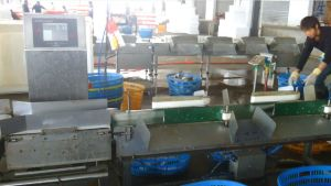SUS 304 Weight Sorter with Best Quality and Service pictures & photos