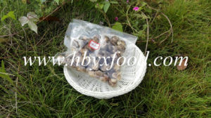 China Hubei Dried White Flower Shiitake Mushroom pictures & photos