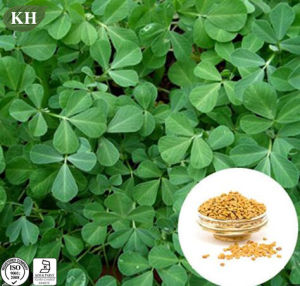 High Quality Fenugreek Seed Extract 4-Hydroxyisoleucine 1%~20% HPLC pictures & photos