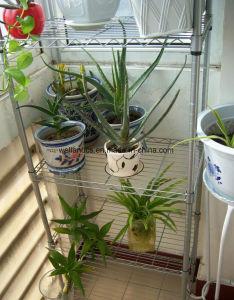Popular Multiple Wholesale Metal Flower Display Rack pictures & photos
