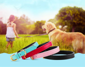 Pet Product Dog Cat Puppy Colorful Collar (C008) pictures & photos