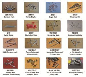 Q235, Q195 Common Loose Nails, E. G., HDG, Stainless Steel Nails pictures & photos