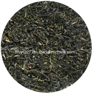 Jasmine Green Tea Leaf for EU/Us/Japan Market pictures & photos