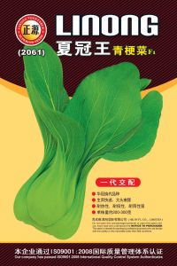 Xia Guan Wang Green Stalk Cabbage F1