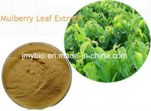 1-Deoxynojirmycin 1%~30% Pure Mulberry Leaf Extract/1-Dnj pictures & photos