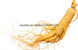 Panax Ginseng Extract 80% Ginsenoside pictures & photos