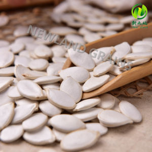 Hot Sale Snow White Pumpkin Seeds with 13mm 14mm 15mm for Roasted and Salted pictures & photos