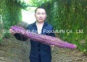 Manufacturer Wholesale Fresh Purple Yam pictures & photos
