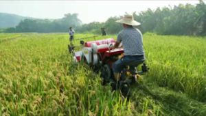 Farmer Helping Rice Harvester Machine on Sale