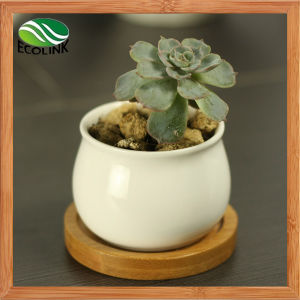 Various Ceramic Succulent Pot with Bamboo Tray pictures & photos