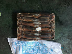 Jigger Catching Sea Frozen Illex Squid pictures & photos