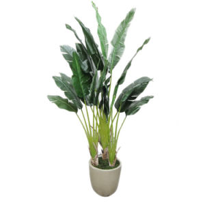 Plastic Banana Plants Artificial Banana Tree pictures & photos