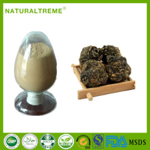 Hot Sale Herb Material 10: 1 Maca Extract Powder pictures & photos