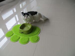 PVC Coil Pet Product Pet Toilet Mat pictures & photos