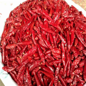 Chao Tian Chilli pictures & photos