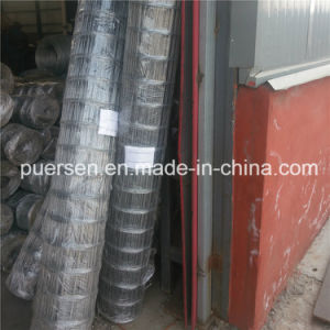 Welded Wire Mesh/Stainless Steel Welded Wire Mesh/Manufacturer Anping Factory pictures & photos