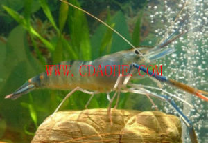 Aquatic Feed Compound Amino Acids (Contain 18 kinds of Amino Acids) pictures & photos