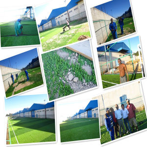 Artificial Grass, Landscape Grass (Lx50) pictures & photos