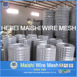 High Quality Welded Wire Mesh pictures & photos