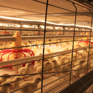 Price H Type Automatic Poultry Cage 5 Layer pictures & photos
