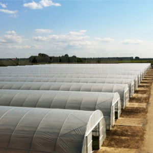 Tunnel Plastic Film Greenhouse for Vegetable with Factory Direct Sale pictures & photos