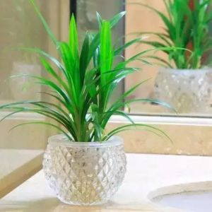 Best Selling Wholesale Clear Glass Vase for Home Decoration pictures & photos