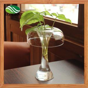Creative Transparent Desktop Hydroponic Flower Vase pictures & photos