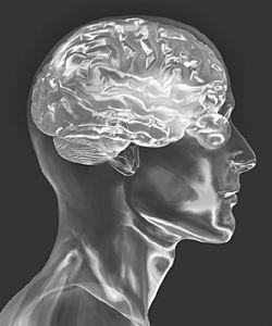 (Citicoline Sodium) -Treating Brain Diseases CAS 33818-15-4 Citicoline Sodium pictures & photos