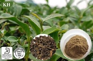 Kingherbs′ 100% Natural Oolong Tea Extract: Polyphenols 20%-80% by UV. pictures & photos