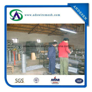 Heavy Type Galvanized Hexagonal Wire Netting Chicken Wire for Gabion pictures & photos