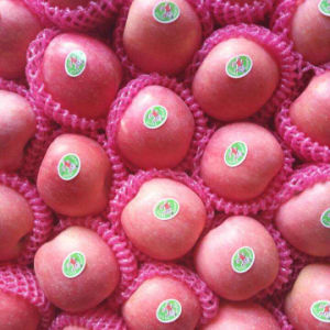 Top Quality of Fresh Blush Red FUJI Apple pictures & photos